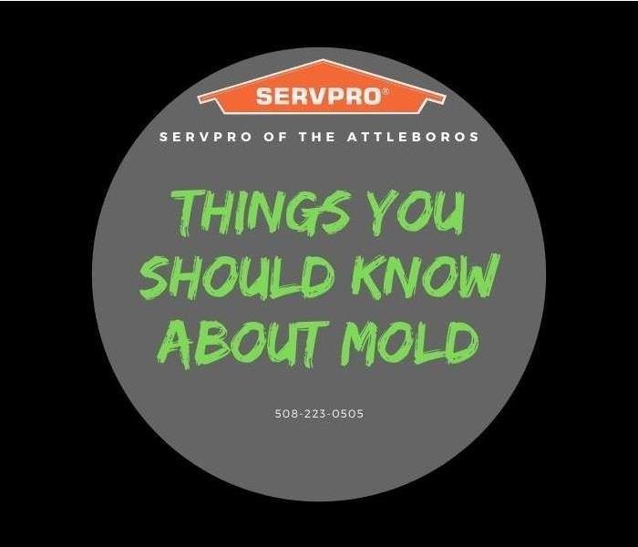 Things you should know about mold