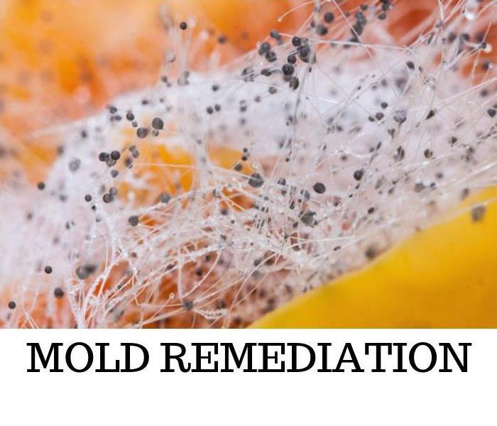 Mold Remediation Summer's Coming (and So Is Mold)!
